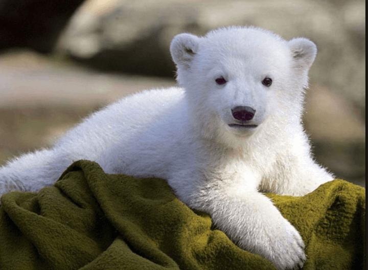 White Bear Z USDJPY 自動売買EA検証レビュー