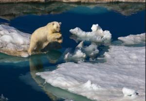 安定重視の有料EA White Bear Z GBP 新発売!!